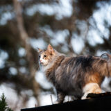 forest cat